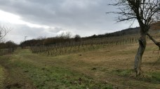 Heading up the hills towards the Route des Vins