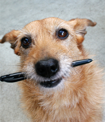 dog-chewing-pen