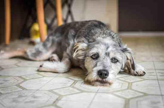 Depressed Pet