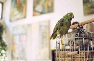 Depression in Pet Birds