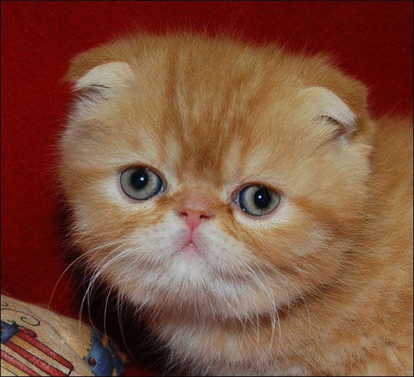 Foldex cat