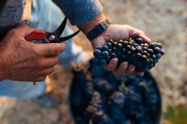 DOCa Rioja 209 - CAMPO, vendimia