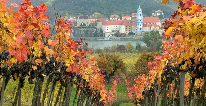 Love Crisp, Elegant Whites? These 6 Austrian Wines are Perfect for You