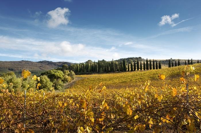 Why Navarra is your Next Favourite Spanish Wine Region