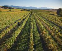 Cloudy Bay vineyard