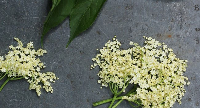 elderflowers Summer Market Food