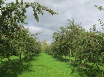 Highbank Orchards20