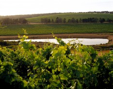 The Wonderful Wines of Oz: No Place Like Australia for Modern, Exciting Wines