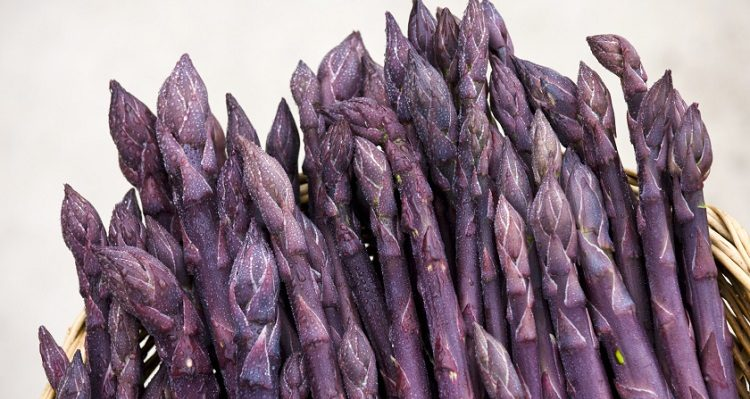 Purple asparagus spears in a basket in the Vale of Evesham, traditional home of asparagus, Worcestershire (Photo by Tim Graham/Getty Images)