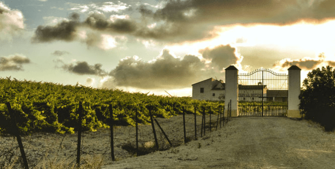 The Different Genres of Spanish Wine: 7 Regions, 7 Styles to Try this Summer