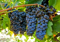 Sizzling Syrah: 7 Superb Bottles to Spice things Up