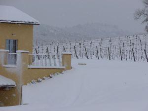 Etna Wines, Taste Sicily's Volcanic Treasure Tenuta delle Terre Nere Vineyard 6