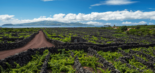 An Island of Wine Exists and it Looks Out of this World