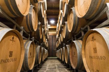 Winery Cantine Paolo Leo Brindisi barell room