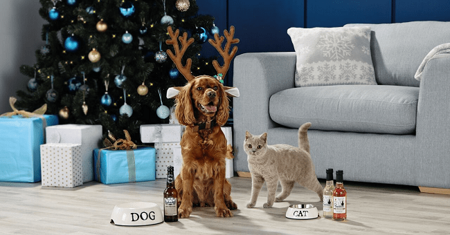 Pawesome News! You Can Now Get Dog Friendly Beer and Pawsecco in Ireland