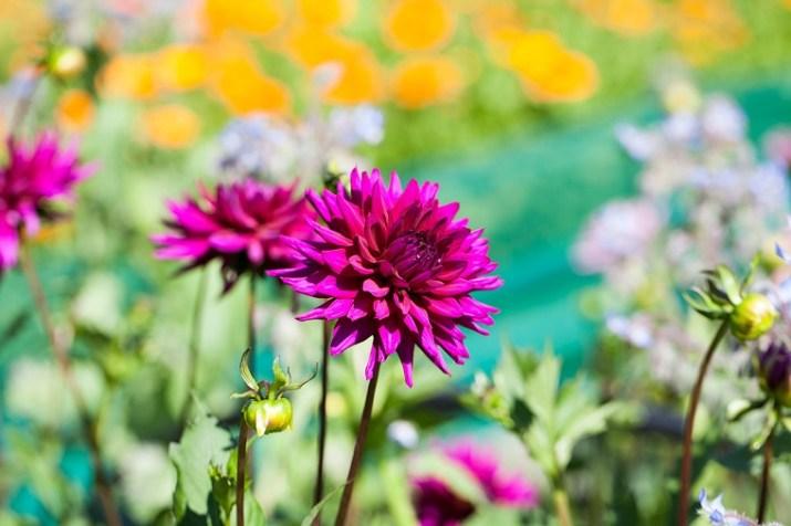 Bumblebee Flower Farm