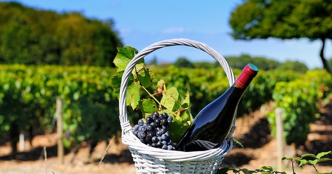 Wines that Put the Beau in Beaujolais