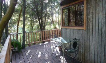 mushroom cabin1