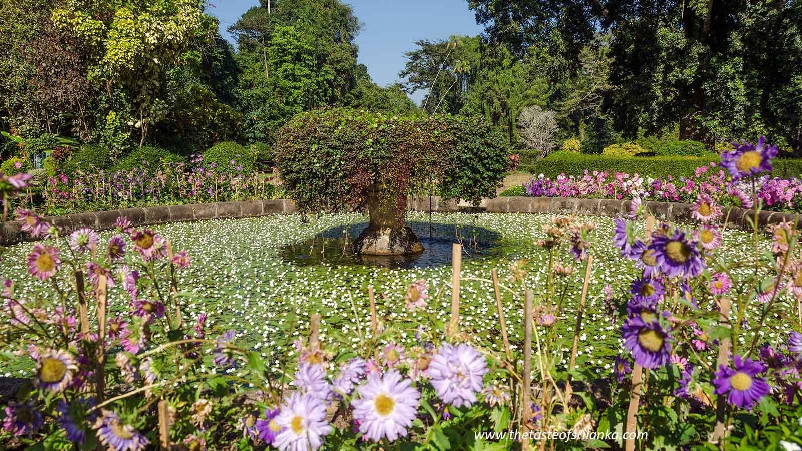 Ogrody Peradeniya, królewskie ogrody przyjemności