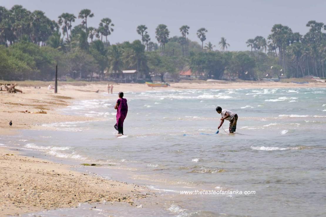 Plaża na wyspie Delft, Sri lanka