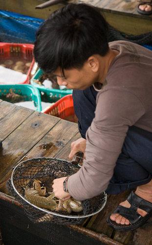 A man picks out a mantis prawn in Halong Bay, Vietnam