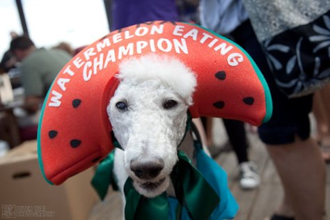 Austin Cupcake Smackdown - excited doggy - Watermelon Eating Champion
