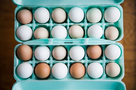 Farm Fresh vs Conventional Eggs - Side by Side