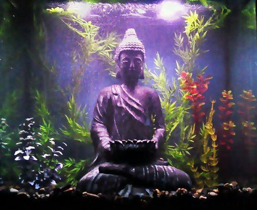 buddha in fish tank