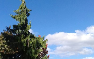 Wordless Wednesday: The Autumnal Sky