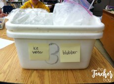 blubber science