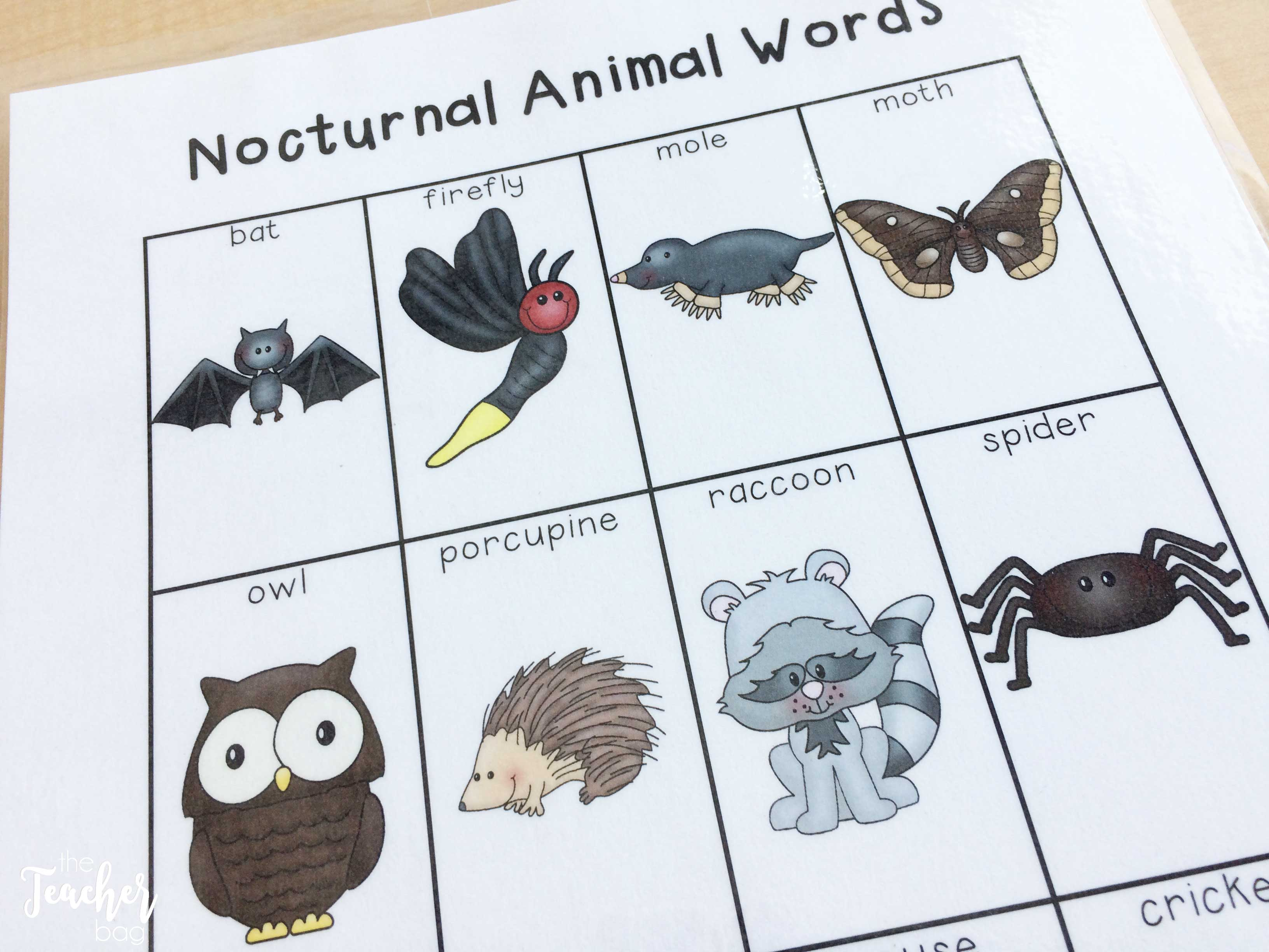 nocturnal-animals-word-list
