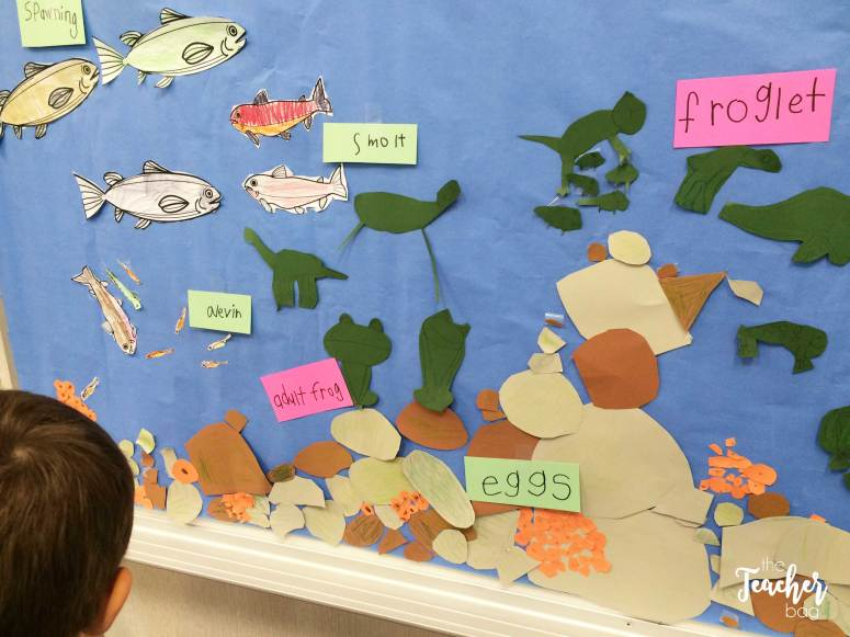 salmon and frog life cycle board