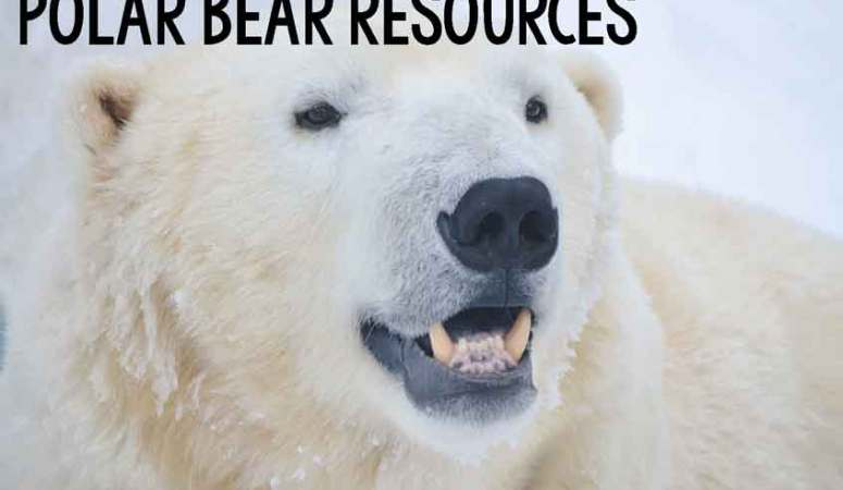 Polar Bear Resources