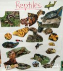 animal classification posters