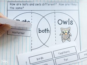 notebook with owls and bats venn diagram