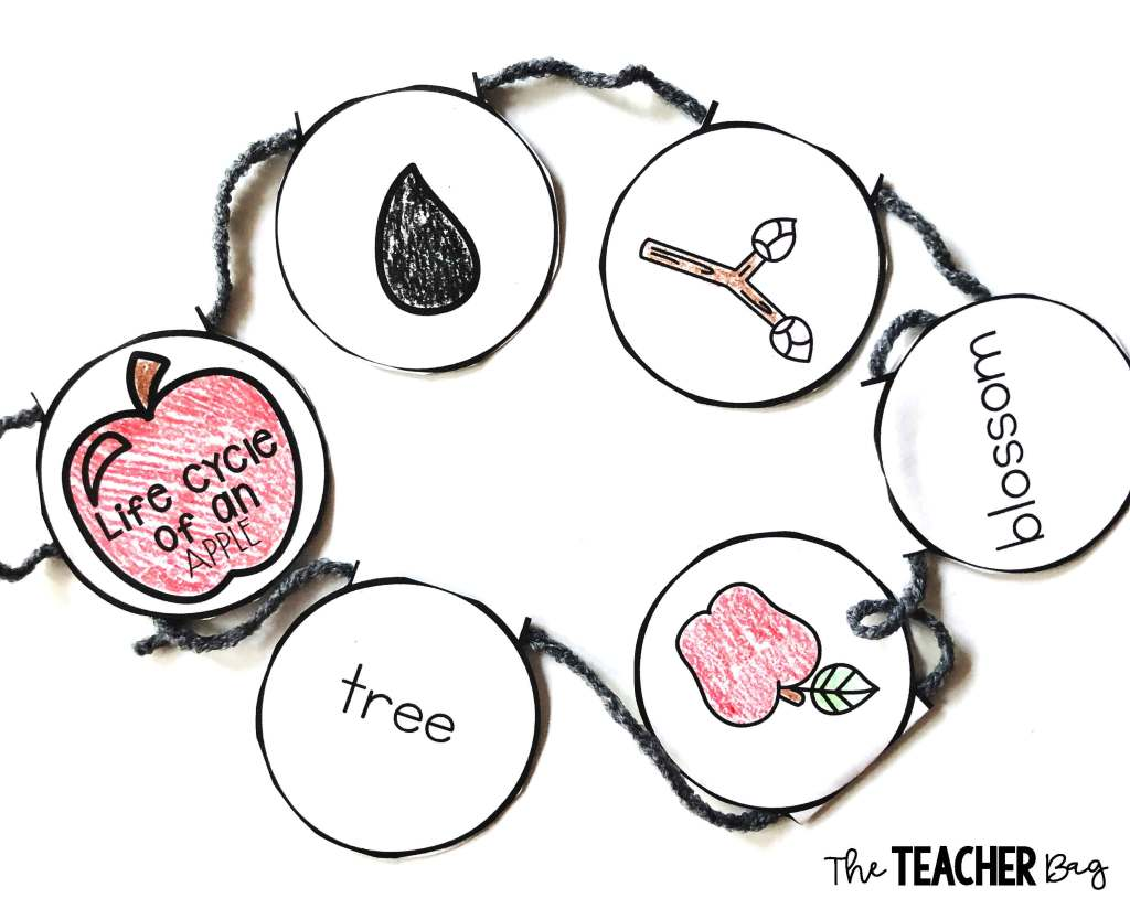 apple-life-cycle-necklace