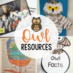 Resource Round-Up: Owl Activities for the Classroom