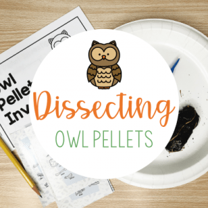 dissecting-owl-pellets