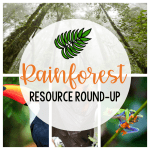 Rainforest Resource Round-Up