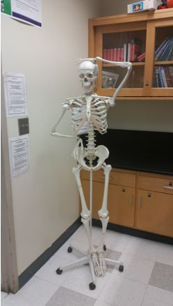 Even my skeleton is not sure where to start.