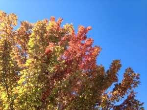 fall-tree-10-11-16