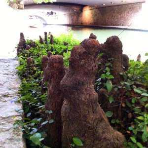 tree-roots-san-antonio-riverwalk-july-2016