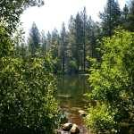 Solo Walk Galena Creek Marilyn's Pond 7.5.17 #4
