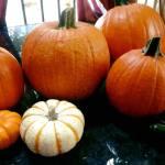 Choosing Pumpkins 10.19.17 #1