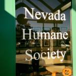 Volunteer Nevada Humane Society 10.27.17 #1