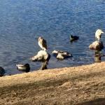 Walk with Thomas Vintage Lake 2.11.18 #4