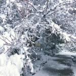 Snow Vintage Lake 3.16.18 #7