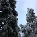 Snow Vintage Lake 3.16.18 #9