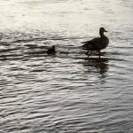 Sunset Walk with Thomas Vintage lake 4.27.18 #9