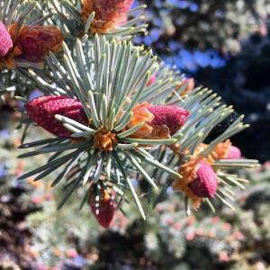 Pins and Needles Tree 5.25.18